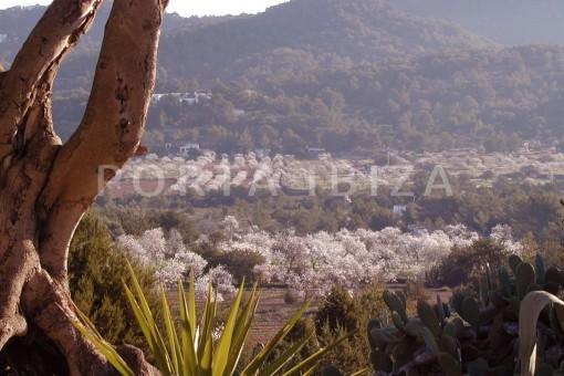 beautiful landscapes-finca-San-Agustin