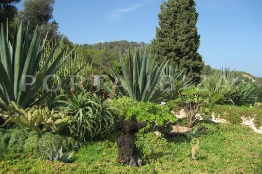 garden-finca-San-Agustin