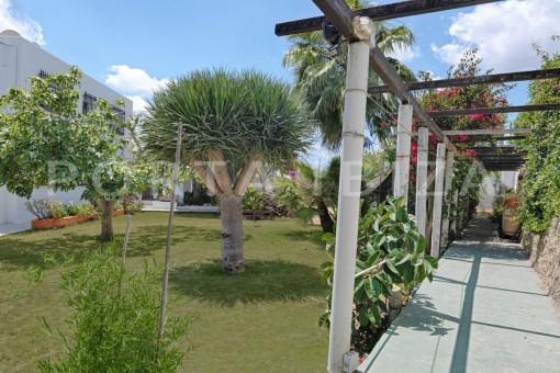 garden & plants-nice house-ibiza