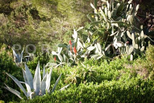 garden area-wonderful modern villa-magnificent setting-Na Xamena