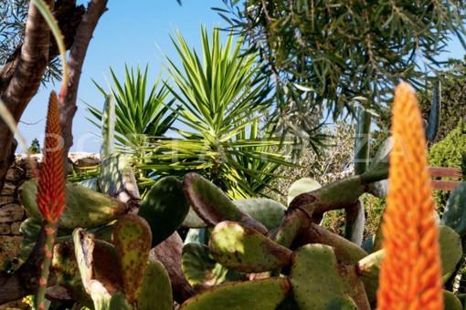 garden-modern villa-magnificent setting-Na Xamena