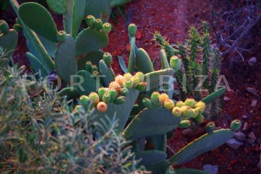 garden-wonderful modern villa-Na Xamena