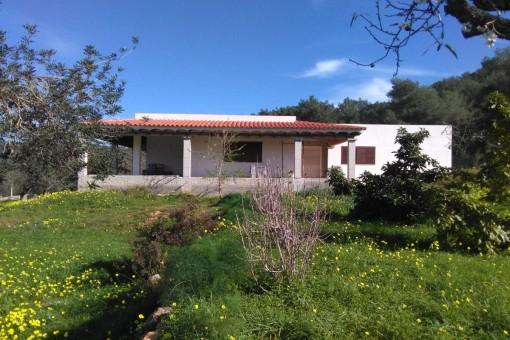 Wunderschöne Finca mit unvollendetem Haus inmitten üppiger Vegetation in Santa Eulalia del Río