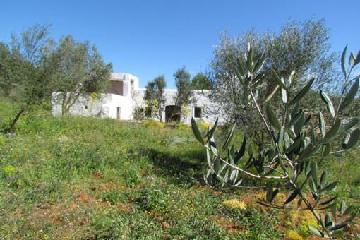 Finca mit großem Grundstück in Sant Joan de Labritja